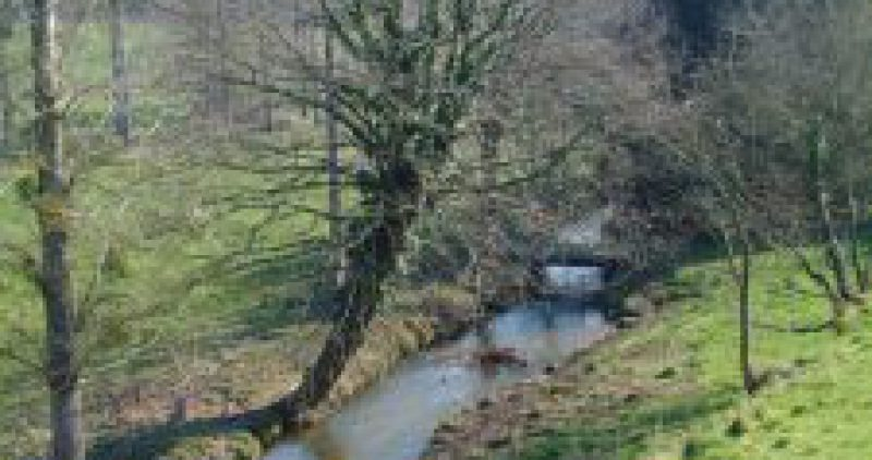 La Truite du Beuvron