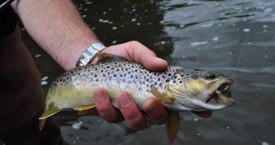 Reportage Halieutique n°2 : Pêche sur la Sienne (50)
