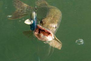 Ouverture de la pêche du brochet en 2ème catégorie mercredi 1er mai à 6h12