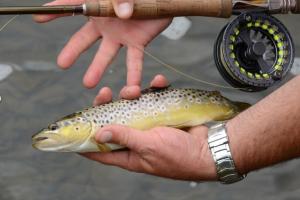 Animation pêche à la Mouche à Gavray, samedi 29 juin de 13h30 à 16h00